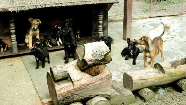 cute dogs group of a cute dogs in the yard hound stock videos & royalty-free footage