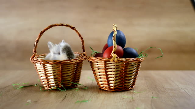 Cute Easter bunny in the basket. Happy Easter video