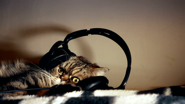 cute fluffy beautiful tabby cat listening to music in big headphones, enjoying life, resting video