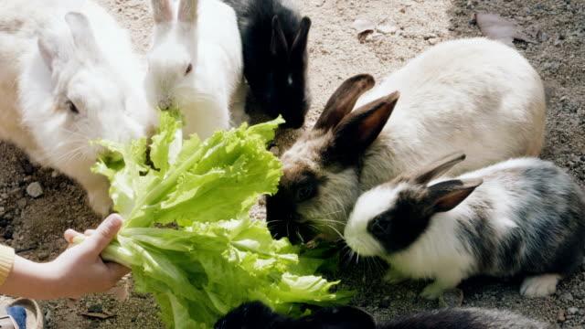 cute fluffy bunny eating lettuce - латук стоковые видео и кадры b-roll