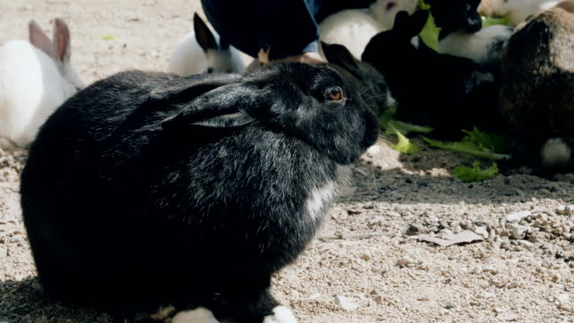 Cute fluffy bunny eating lettuce