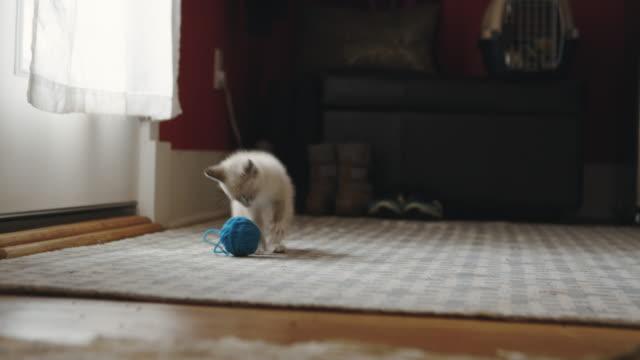 cute fuzzy kitten playing with a blue ball of yarn on a rug - kociak filmów i materiałów b-roll