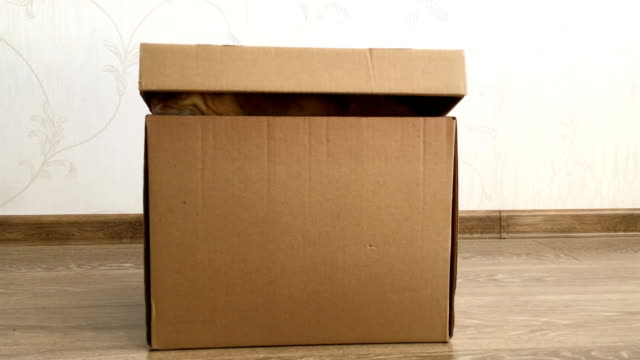 Cute ginger cat sitting inside a carton box. Fluffy pet is hiding under box cover