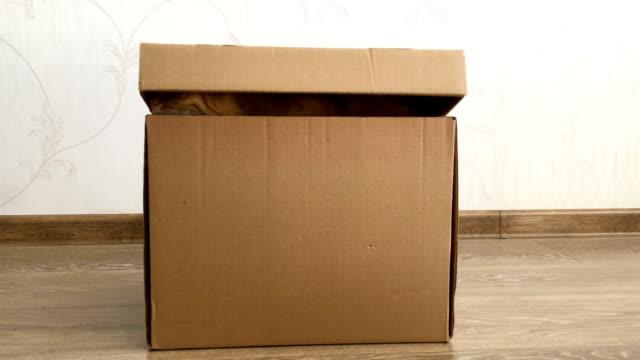 şirin zencefil kedi bir karton kutu içinde oturuyor. kabarık pet kutu kapak altında saklanıyor - örtmek stok videoları ve detay görüntü çekimi