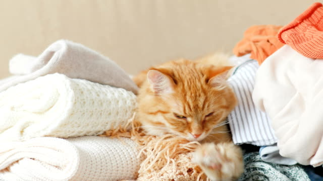 cute ginger cat sleeps on a pile of knitted clothes. warm knitted sweaters and scarfs are folded in heaps. fluffy pet is dozing among cardigans. cozy home background - уютный стоковые видео и кадры b-roll