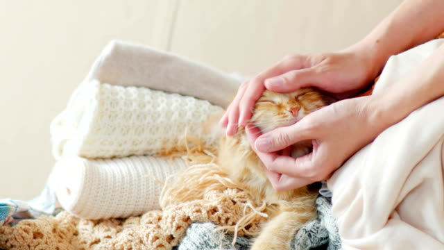 Cute ginger cat sleeps on a pile of knitted clothes. Warm knitted sweaters and scarfs are folded in heaps. Fluffy pet is dozing among cardigans. Man strokes his pet. Cozy home background video