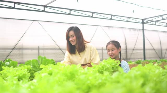 かわいい女の子と彼女の母親は温室で水耕野菜を収穫 - 収穫点の映像素材/bロール