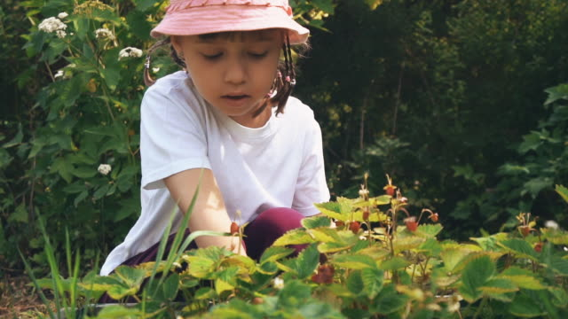 cute girl picking berries - bacca video stock e b–roll