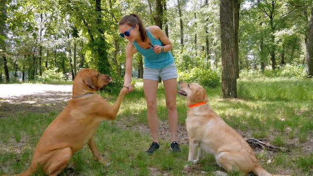 cute girl training dogs in park on green grass - łapa filmów i materiałów b-roll