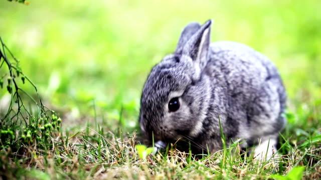 cute gray baby rabbit - tavşan hayvan stok videoları ve detay görüntü çekimi
