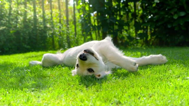 Cute Happy Puppy Relaxing in the Garden video
