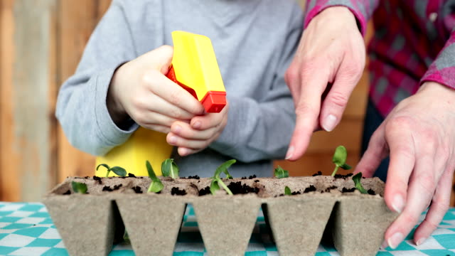 cute kid and his mother re-potting germinated seeds while quarantined at home at springtime - gardening video stock e b–roll