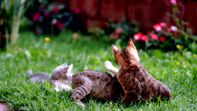 cute kitten на сад - кошка смешанной породы стоковые видео и кадры b-roll