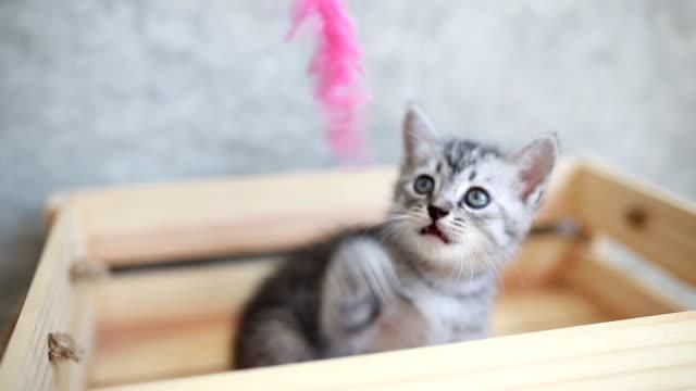cute kitten playing in box - kociak filmów i materiałów b-roll