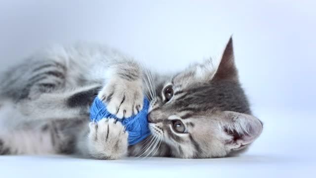hd: ładny kociak gra w piłkę - kociak filmów i materiałów b-roll