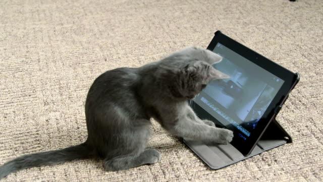 ładny kociak gra z cyfrowy tablet robią selfie - kociak filmów i materiałów b-roll