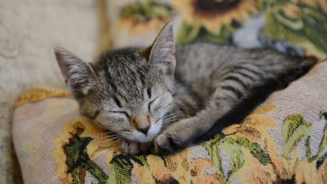 Cute kitten sleeping on a sofa. Cute kitten sleeping on a sofa. tabby cat stock videos & royalty-free footage