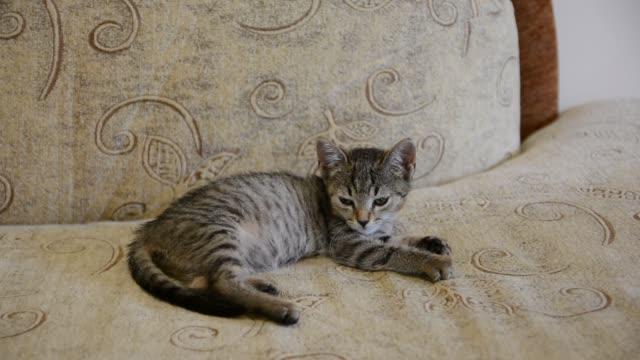かわいい子猫がソファで寝ています。 - 子猫点の映像素材/bロール