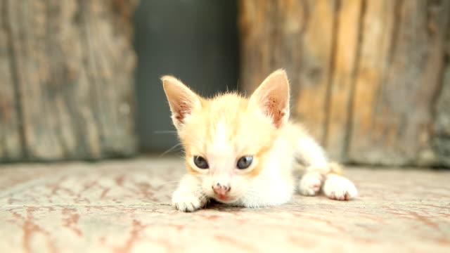 vídeos y material grabado en eventos de stock de lindo gatito juega al gato y duerme solo. - vibrisas