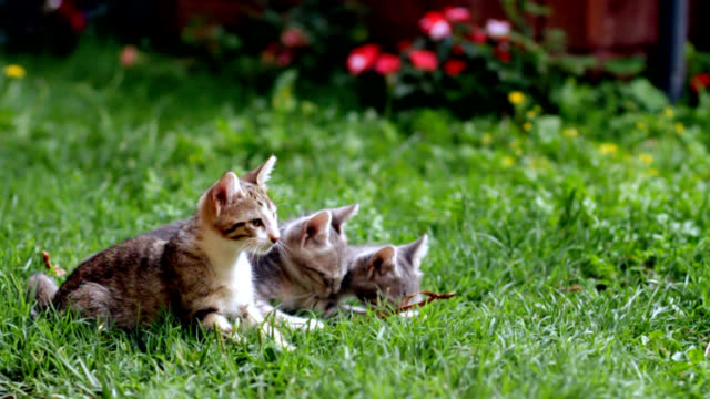 милый kittens in garden - кошка смешанной породы стоковые видео и кадры b-roll