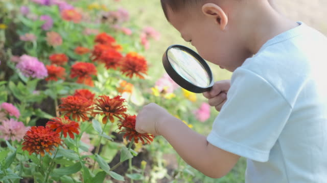 Cute little Asian 2 - 3 years old toddler baby boy child exploring environment by looking through a magnifying glass