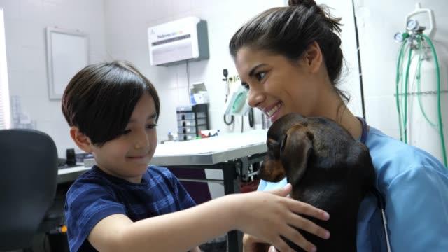 söt liten pojke strök hans husdjur medan veterinären håller hunden båda ser väldigt glad - veterinär, undersökning bildbanksvideor och videomaterial från bakom kulisserna