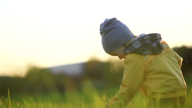 Cute little boy walking in grass meadow touching green plant blades at summer sunset sunny warm yellow evening happy looking serious at camera - home education exploring nature kindergarten ecology concept video