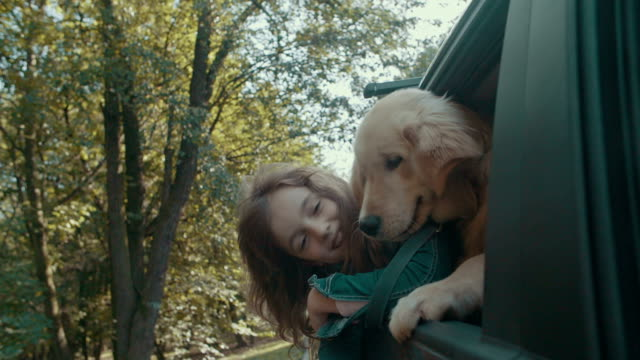 HD: Cute Little Girl and Dog In Car. video