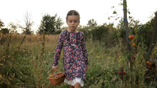 Cute Little Girl With A Basket Picking Up Organic Food From The Vegetable Garden. Real People, Rural Scene. video