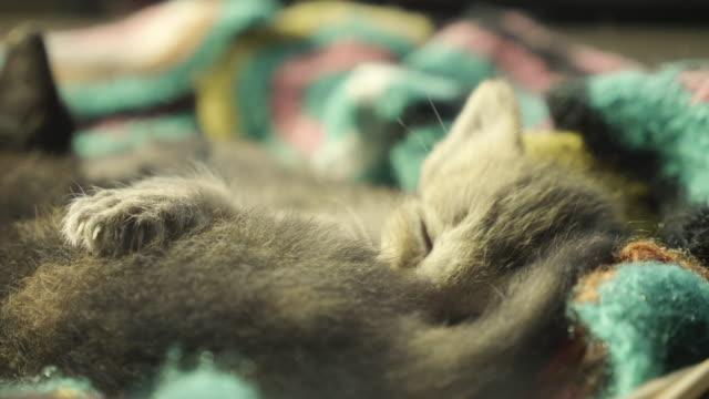 かわいい子猫は、太陽の光でお互いに抱擁バスケットに眠ります - ネコ科点の映像素材/bロール