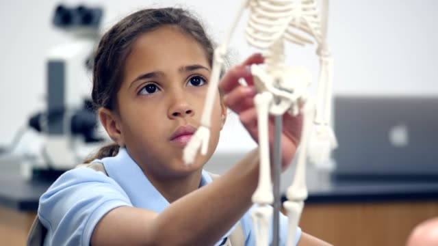 vídeos de stock e filmes b-roll de cute mixed race private school student examines human skeleton model - anatomia