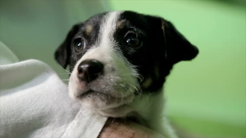Cute mixed race puppy first time at the veterinarian Cute mixed race puppy first time at the veterinarian fear stock videos & royalty-free footage