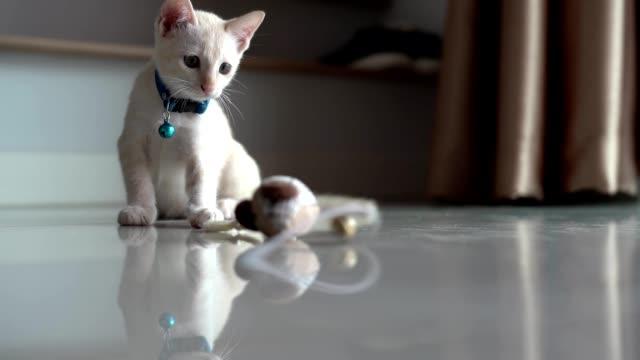 Cute orange baby kitty licking its tiny striped paw