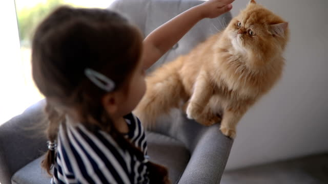 Cute playful child playing with her cat at home