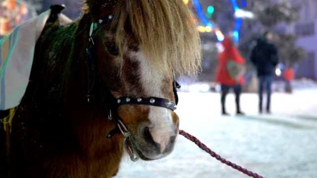 Cute Pony in the Evening on the Street Stands under Falling Snow on the Christmas Market in Winter