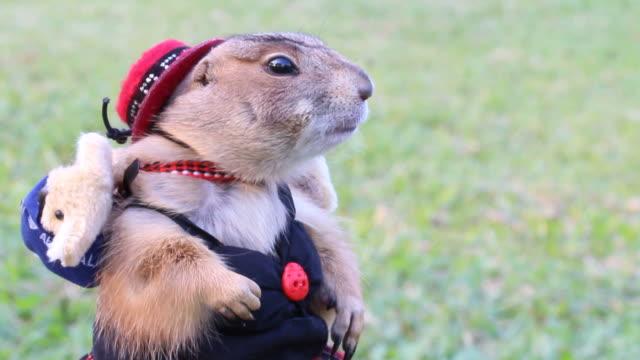 cute prairie dog - söt bildbanksvideor och videomaterial från bakom kulisserna