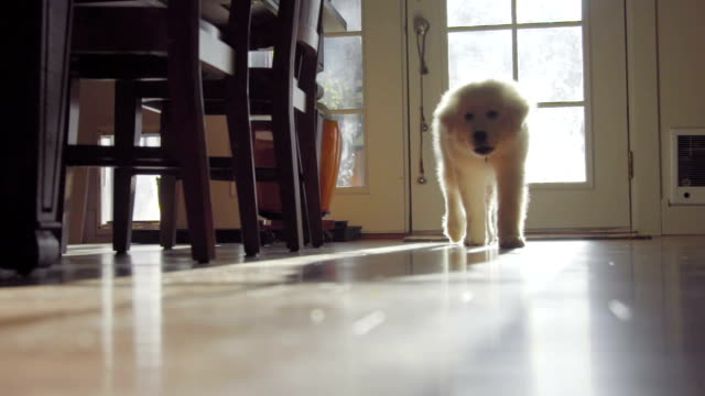 Cute puppy approaches video
