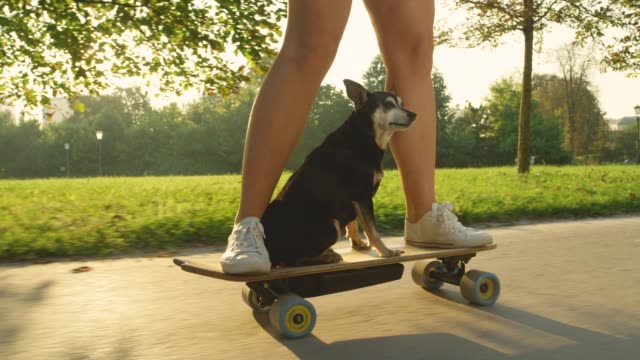 slow motion: cute puppy calmly cruising on the longboard with cool skateboarder. - pies filmów i materiałów b-roll