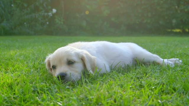 Cute Puppy Videos Download