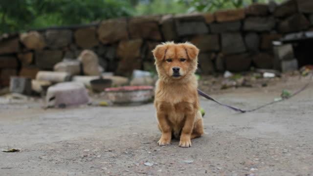 Cute Puppy Sitting video