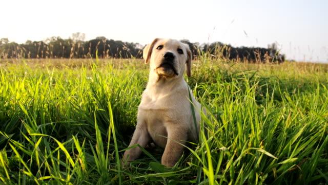 LA Cute Puppy video