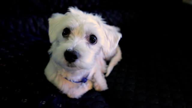 かわいい子犬 - 動物の身体各部点の映像素材/bロール