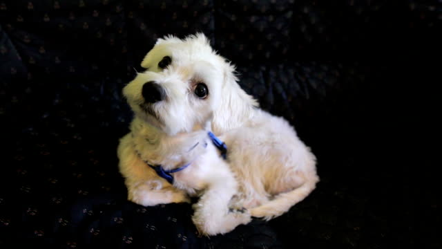 かわいい子犬 - 斜めから見た図点の映像素材/bロール