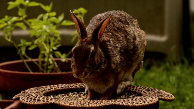 Cute rabbbit eats seeds video