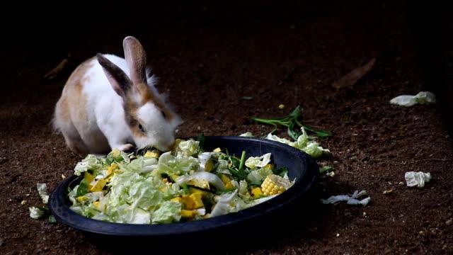 cute rabbit eating food video