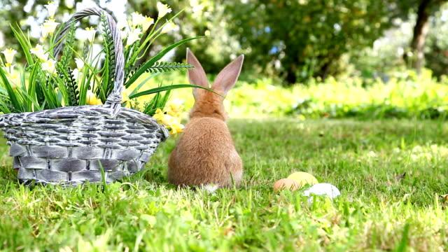 Cute rabbit in the garden video