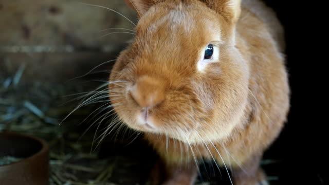 sevimli tavşan kafesi - tavşan hayvan stok videoları ve detay görüntü çekimi