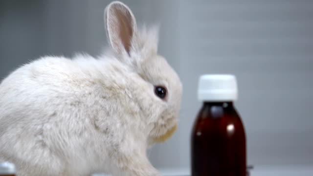 söt kanin sniffa flaskor av medikamenter, pet behandling, förebyggande av sjukdomar - pet bottles bildbanksvideor och videomaterial från bakom kulisserna