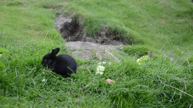 vidéos et rushes de adorables lapins assis sur l'herbe - apprivoisé