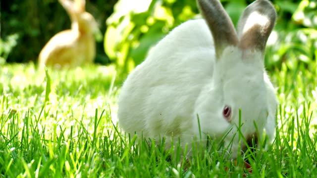Cute rabbits video